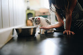 Little girl sits on the floor in a domestic home, kitchen or dining room, next to a tiny little kitten who is eating from a large silver pet bowl. Heartwarming and adorable moment between a young child and her pet. Feeding, curiosity, love and bonding, girl takes her new charge duties seriously making sure the cat is eating