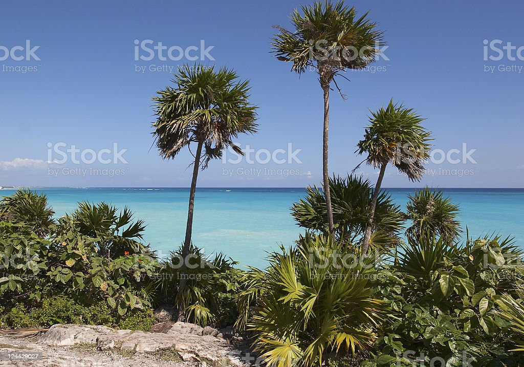 The Carribean royalty-free stock photo