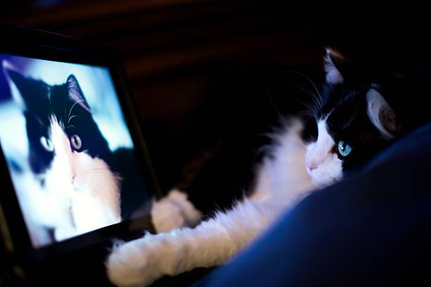 The cat admiring a photo of herself picture id112951652?b=1&k=6&m=112951652&s=612x612&w=0&h=gdkyiyvwzfjmolecvbvvltrpl8y2ifczyabdgxsx7js=