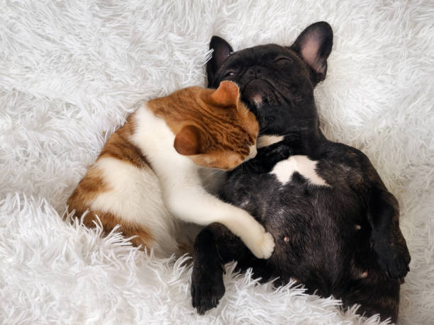 The cat affectionately hugging a sleeping dog picture id646819948?b=1&k=6&m=646819948&s=612x612&w=0&h=bgg pz98ra8bgp5k tutxpbo5fygefvpwf7ehxdrzs4=