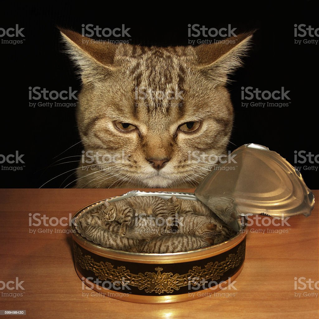 The cat and it's nightmare. stock photo