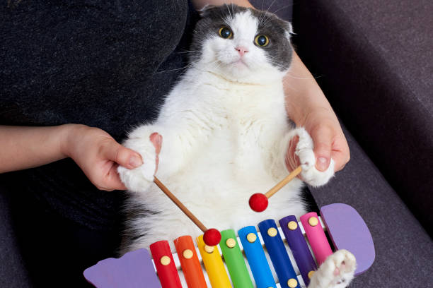 The cat and its owner play a musical instrument a xylophone picture id1211625177?b=1&k=6&m=1211625177&s=612x612&w=0&h=zdyhj9on3ygg7gccyegb02ae6qto 1r4r7olcxybkla=