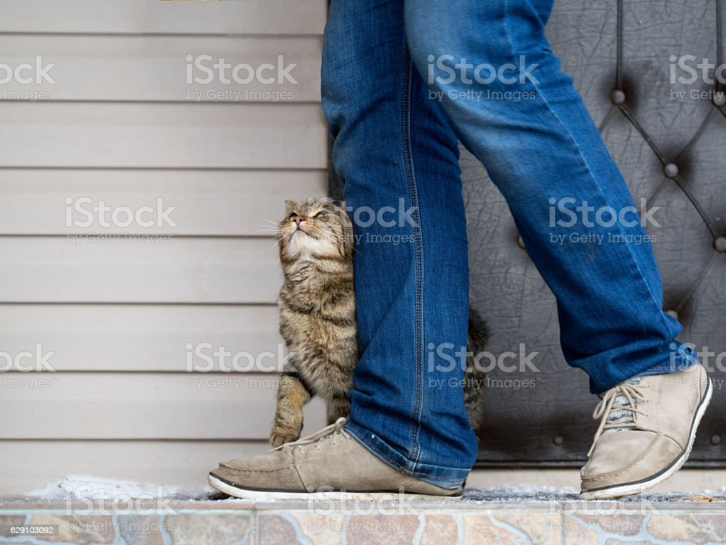 The cat and the owner - foto de stock