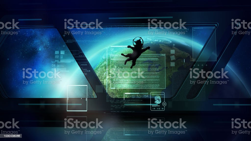 The Cat Astronaut looks at the earth from space stock photo