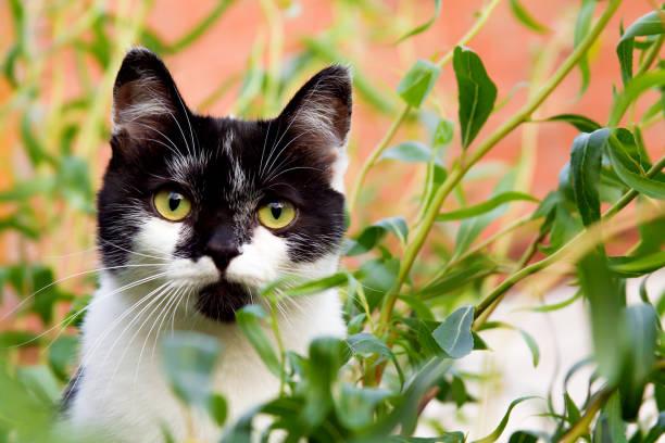 The cat climbed a tree picture id818207104?b=1&k=6&m=818207104&s=612x612&w=0&h=cll6hh6n kkjjhu kld7 ur 4 ce8fg279epxybkdxu=