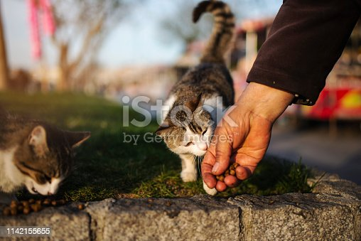 The cat eats the food from the senior man hand
