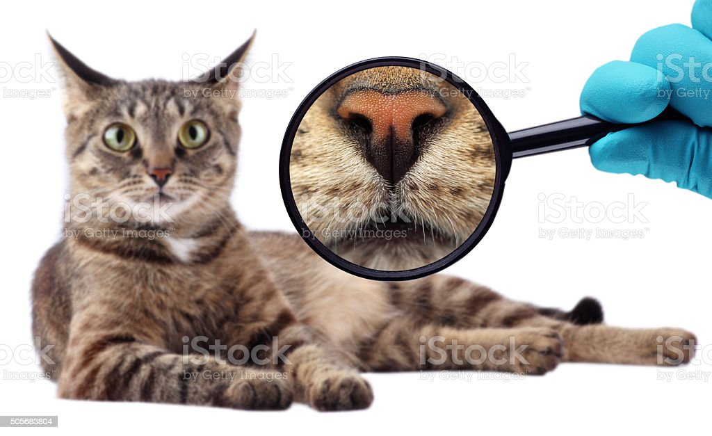 The Cat Expert. We explore cat stock photo