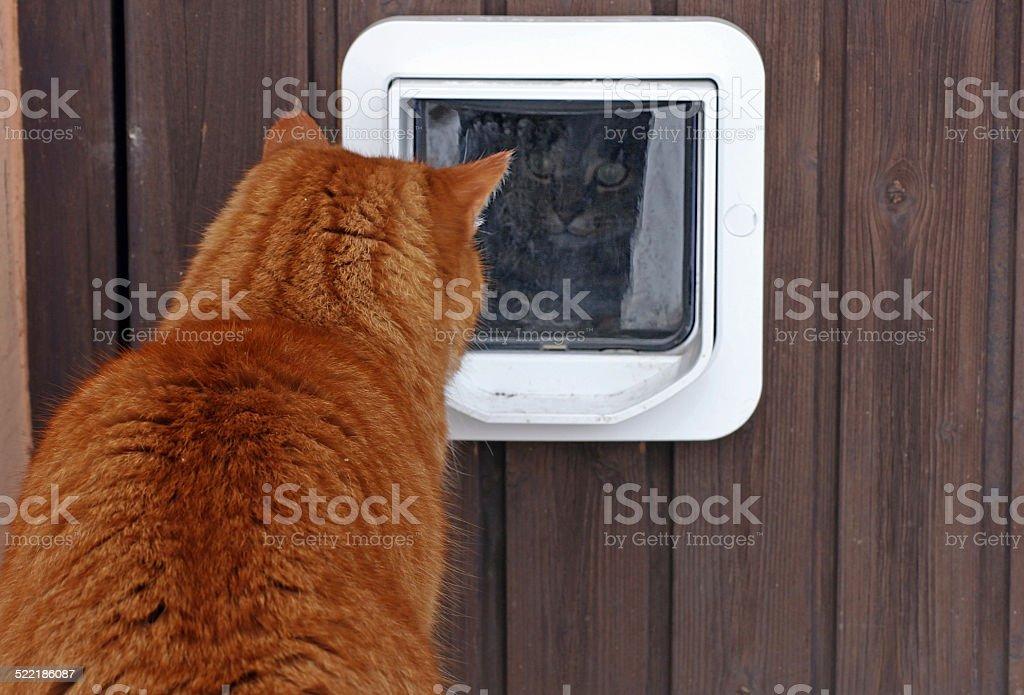 Die cat Klappe – Foto