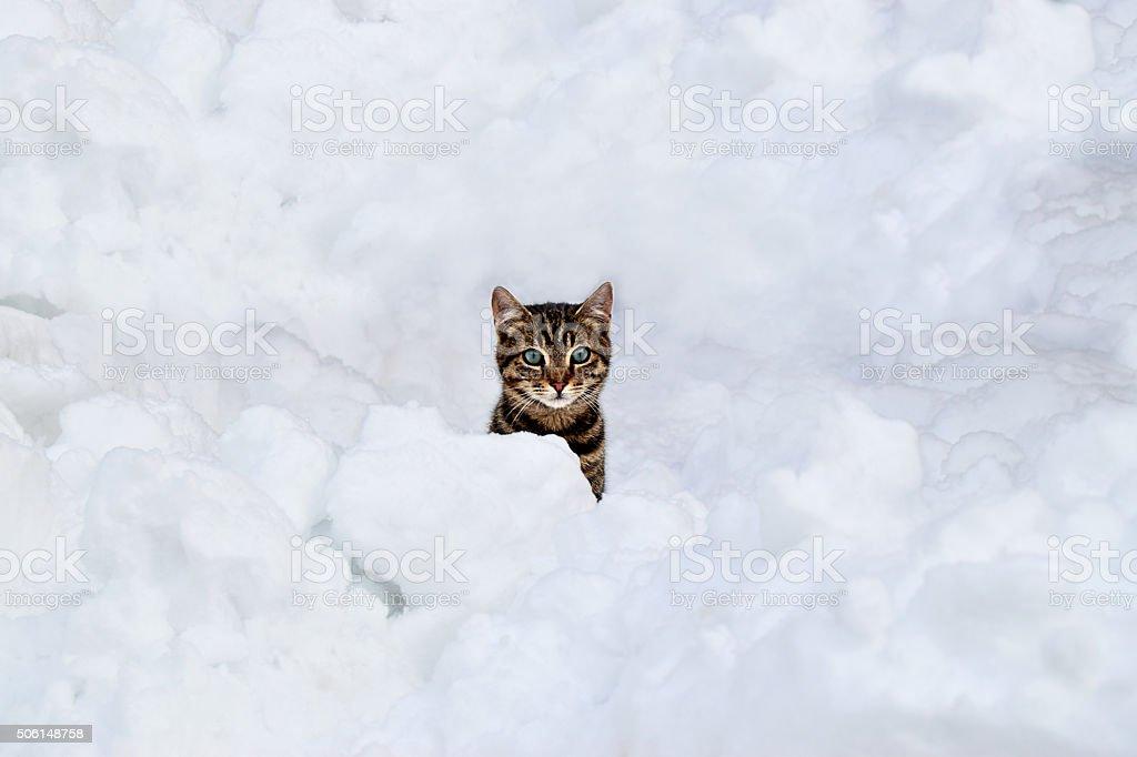 The cat hiding under the snow stock photo