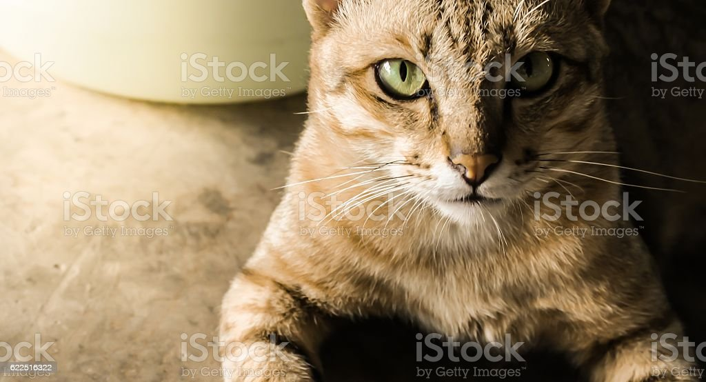 The cat in sepia light stock photo