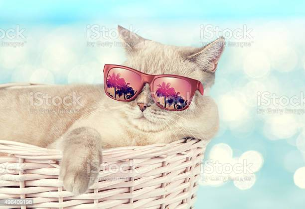 The cat in sunglasses lying in a basket picture id496409198?b=1&k=6&m=496409198&s=612x612&h=ktsezmjmnvaysubg byhi1nclhut3 6c1qjmmc7of0c=