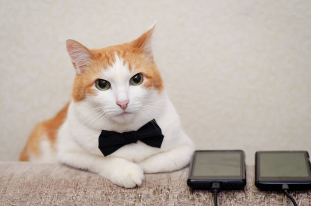 The cat in the bow tie with the phone stock photo