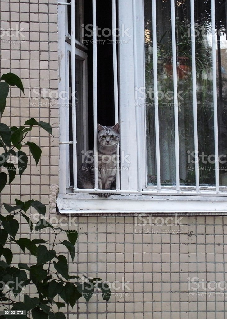 The cat is behind bars. A dull life of a domestic cat in a big city.