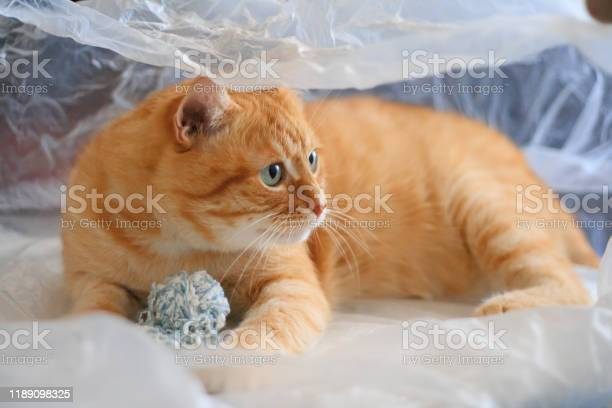The cat is played with a ball of thread in a plastic bag picture id1189098325?b=1&k=6&m=1189098325&s=612x612&h=gx5pzpzadsfkjvb2a2pajzyhutmjdakbncxi6z cmcu=