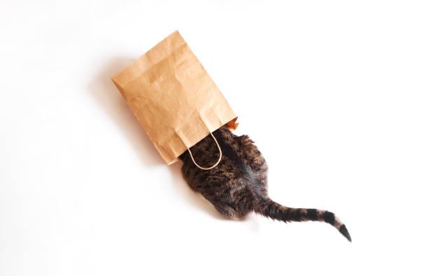 The cat is sitting in a paper craft package picture id1130304831?b=1&k=6&m=1130304831&s=612x612&w=0&h=njq2cqekulca8lydp6vpuwju8s9t9xebsc bo2jjavy=