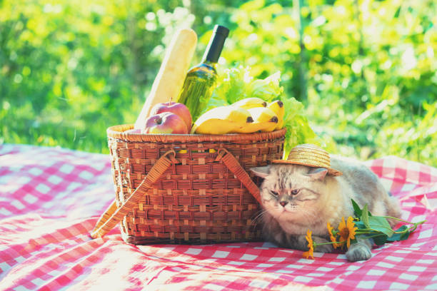 Image result for cats at picnic