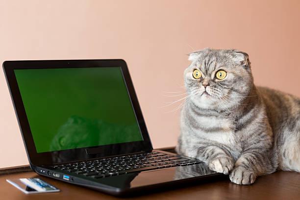 The cat lies near the laptop with green screen picture id518552238?b=1&k=6&m=518552238&s=612x612&w=0&h=qq0qtndyedowaz98qmgf6a5azj6b r6 kn3x40bu kk=
