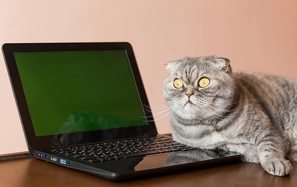 The cat lies near the laptop with green screen picture id523162002?b=1&k=6&m=523162002&s=612x612&w=0&h=smaeghba05vb6ftz4xholqvj1tantu6olaw nx sonu=
