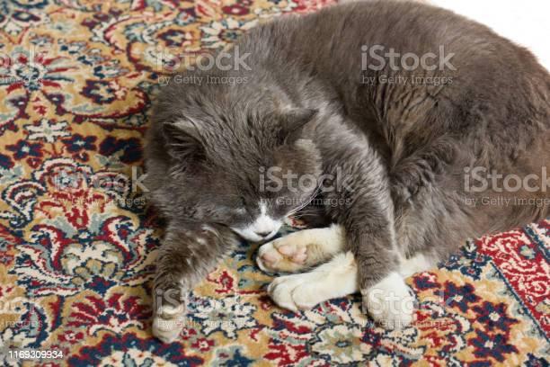 The cat lies on the carpet gray cat picture id1169309934?b=1&k=6&m=1169309934&s=612x612&h=onmv3ozcm2ol7jdhu8aanfdlyuk8ny0kohohy34mq1i=
