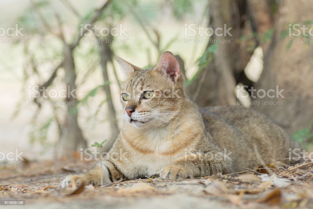 The cat lies on the ground and looks at something. royalty-free stock photo