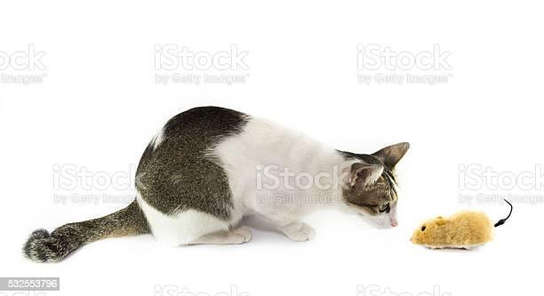 The cat looking toy mouse picture id532553796?b=1&k=6&m=532553796&s=612x612&h=zrvmxcxvf8i4zxnmkmqthxxf5tvrbajfxnmdp xeqno=