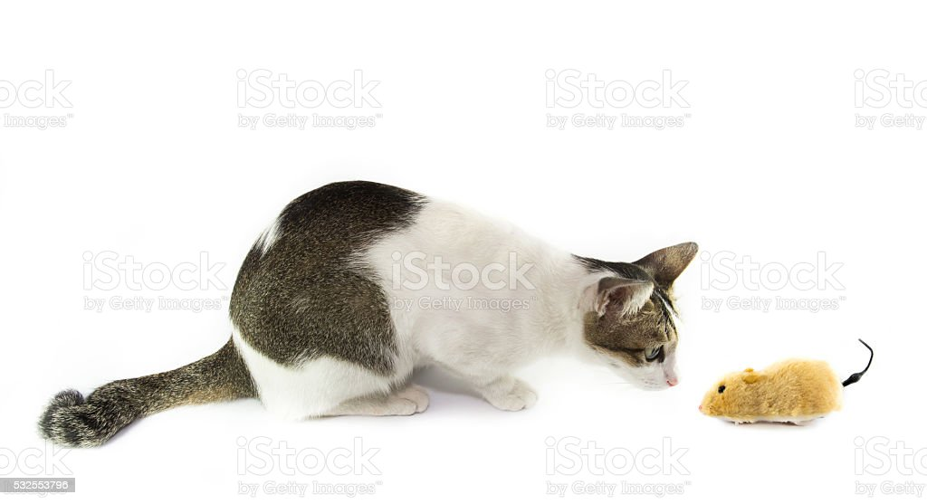 The cat looking toy mouse stock photo