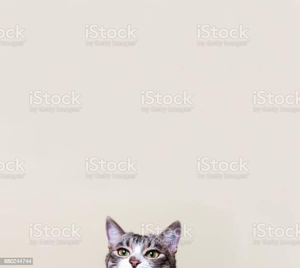 The cat looks curious kitten picture id680244744?b=1&k=6&m=680244744&s=612x612&h=lugrao9jcirtadb2siquqkzawcjbqytkitk q0mdha4=
