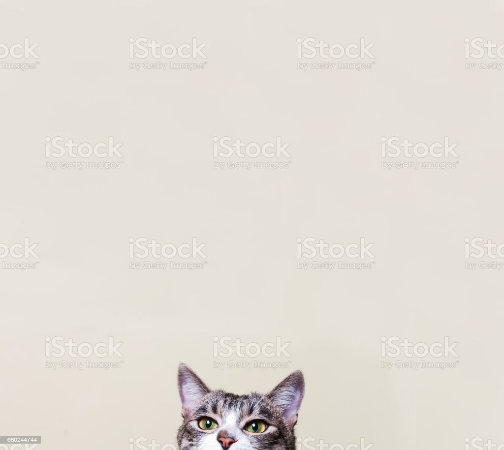 The cat looks . Curious kitten. stock photo