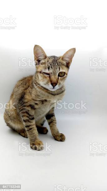 The cat made a bee sting cheeks and eye swelling picture id647753348?b=1&k=6&m=647753348&s=612x612&h=e5k2t1tkw 3g u h0kss8rsgghxw7dsmnzpqxclpwfi=
