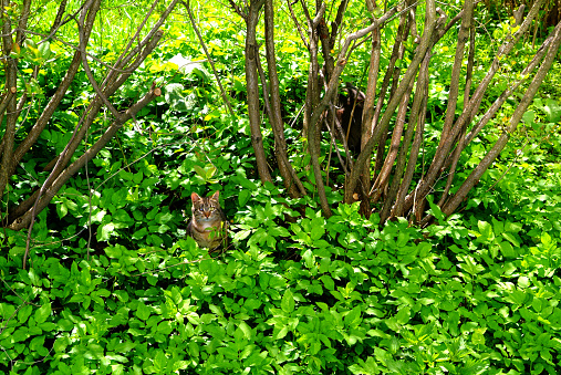 the cat near the bushes in the grass
