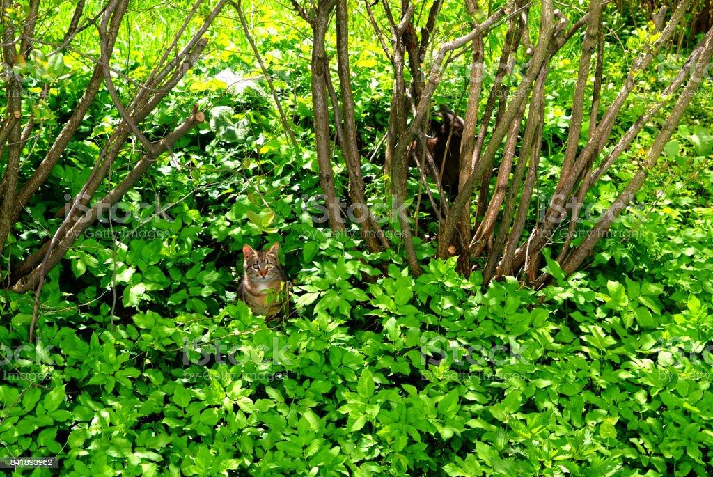 el gato cerca de los arbustos en la hierba - foto de stock