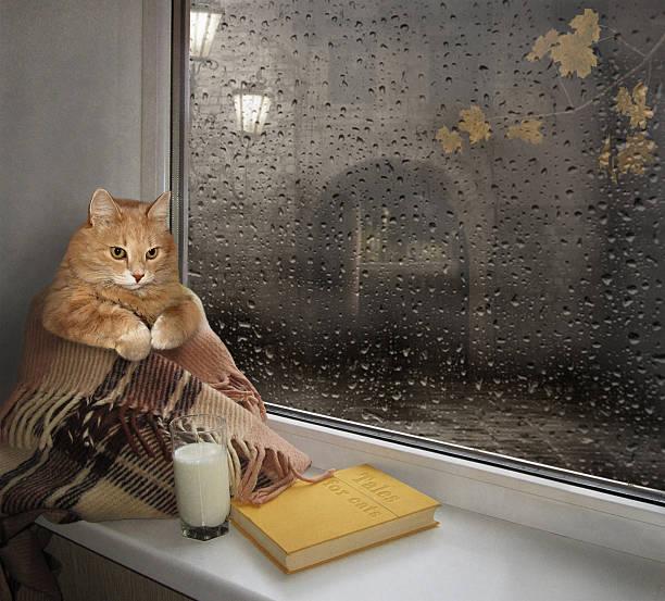 the cat on a windowsill. - humor bücher stock-fotos und bilder