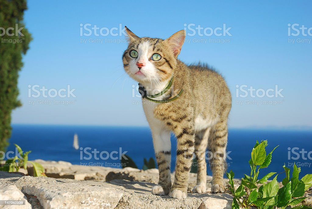 The cat on vacation royalty-free stock photo