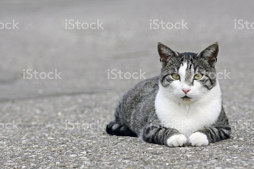 the cat stock photo