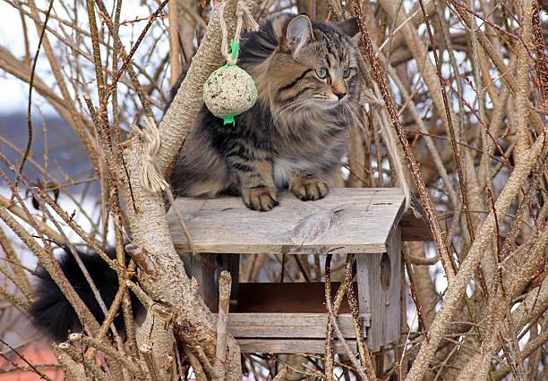 The cat picture id481546631?b=1&k=6&m=481546631&s=612x612&w=0&h=iw2jq1rhxqawivfzsy tfldh1fkylexz81gea6fqm7u=