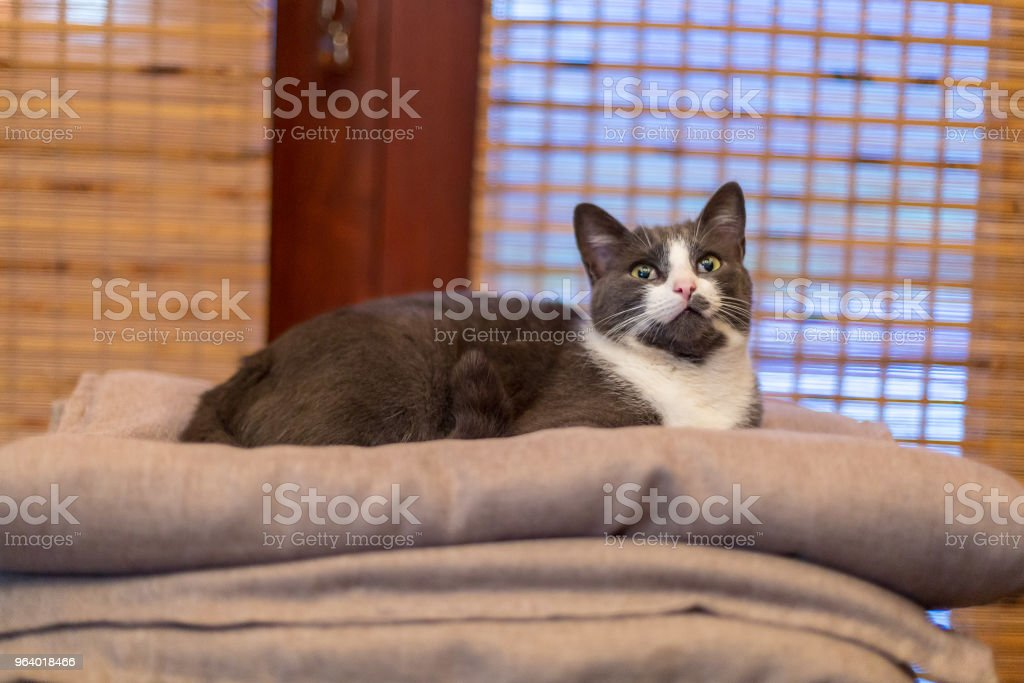 O gato - Royalty-free Animal Stock Photo