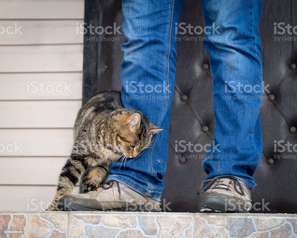 The cat rubs against stock photo