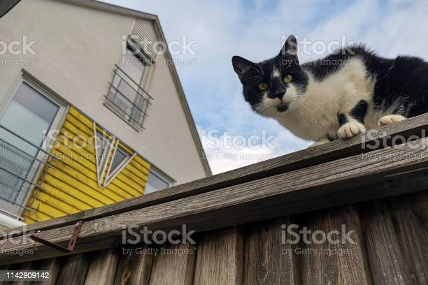 The cat sits on a high fence and looks down picture id1142909142?b=1&k=6&m=1142909142&s=612x612&h=uxqohl9z6fqqz1ygzxynwd7is6iav1yg5ri9ksvyjau=