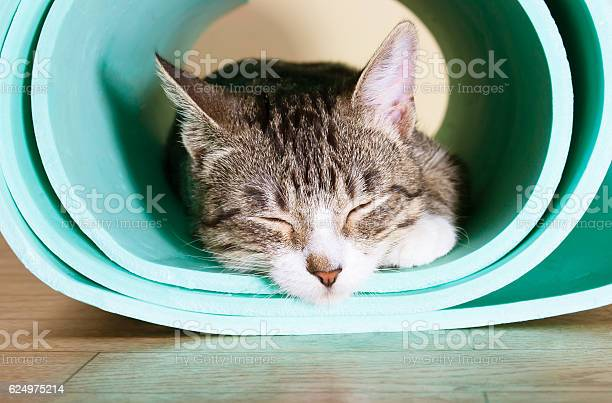 The cat sits on the mat for yoga picture id624975214?b=1&k=6&m=624975214&s=612x612&h=wcky u79cg3ziyyn4jzj5v5k2i abnyle ox24viz3s=
