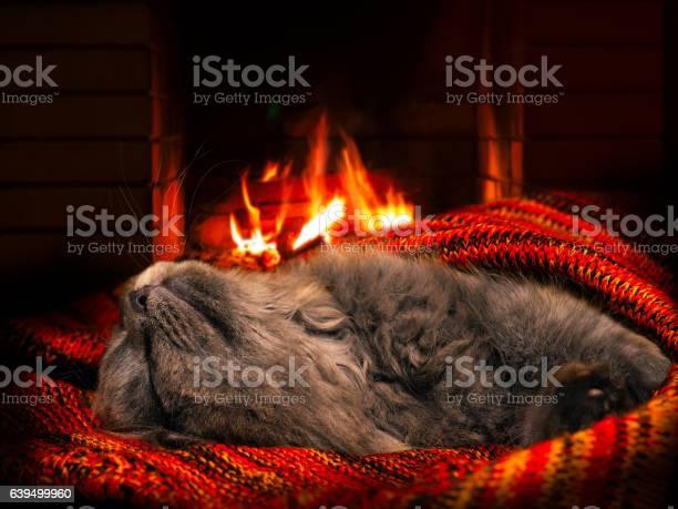 The cat sleeps by the fireplace picture id639499960?b=1&k=6&m=639499960&s=612x612&h=jyhb60myqqfijikowqefmwhk4fr 2l4v7qq28ctswem=