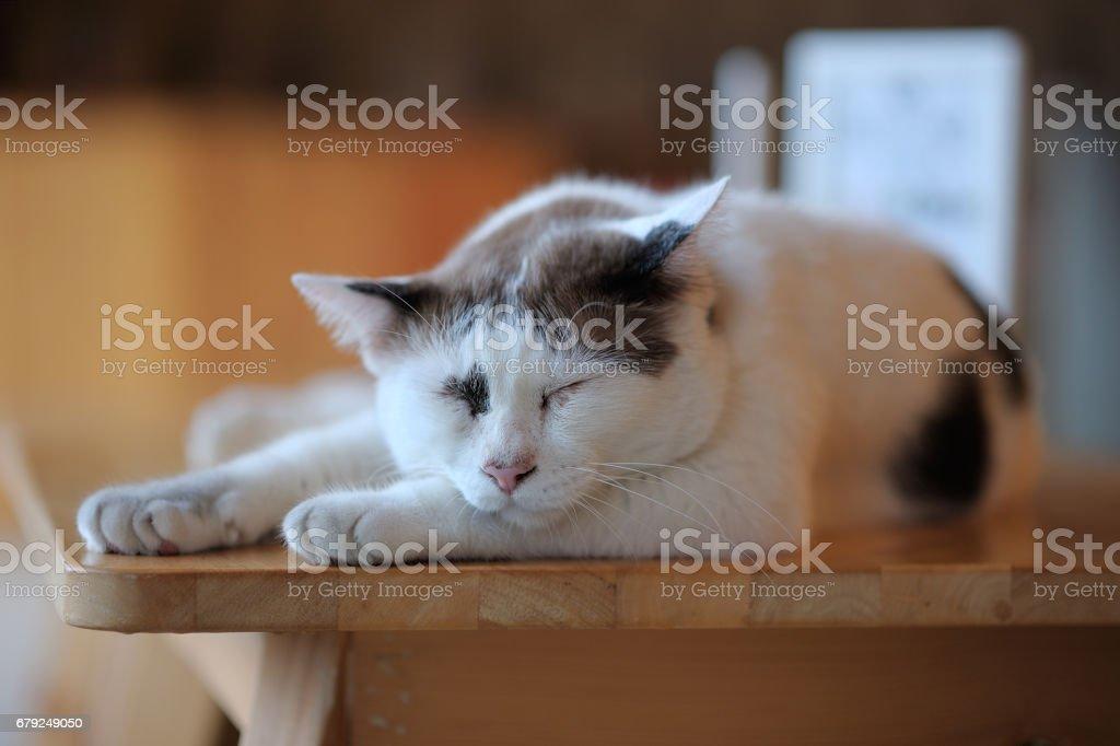 The cat sleeps happily. foto de stock royalty-free