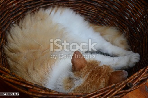 The cat sleeps in a basket. Homeless cat.