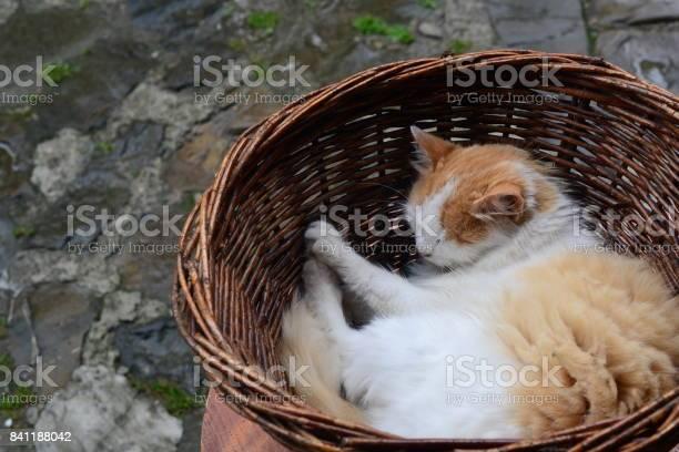 The cat sleeps in a basket homeless cat picture id841188042?b=1&k=6&m=841188042&s=612x612&h=gyl vu9kyeuzwtg5ejsgtz1scm9vh3bzbi6kthnjkiu=