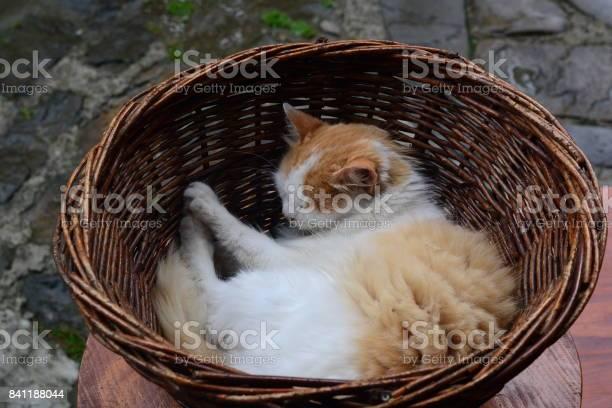 The cat sleeps in a basket homeless cat picture id841188044?b=1&k=6&m=841188044&s=612x612&h=dhw7vkltkxqymml1v6euwqhkq lcru1ypyep3ganajs=
