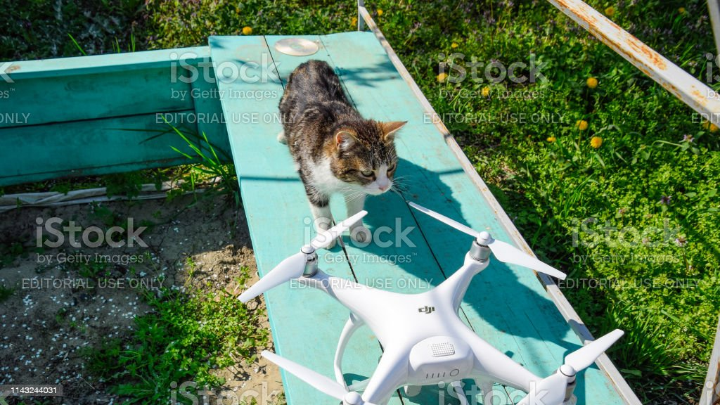 The cat sniffs the drone DJI phantom 4. Surprise the animal with a...