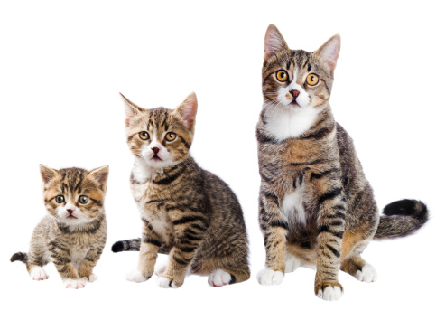istock The cat with three lives 155429187