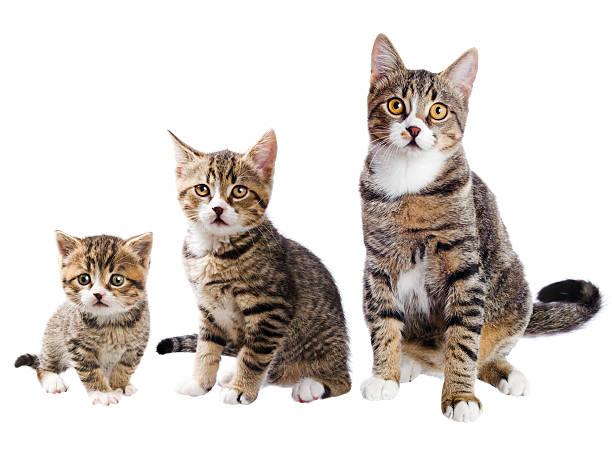 The cat with three lives picture id155429187?b=1&k=6&m=155429187&s=612x612&w=0&h= 2pxvmsg 8vf09bdjxwf3tjgalkjlbogxehe8 vq oq=