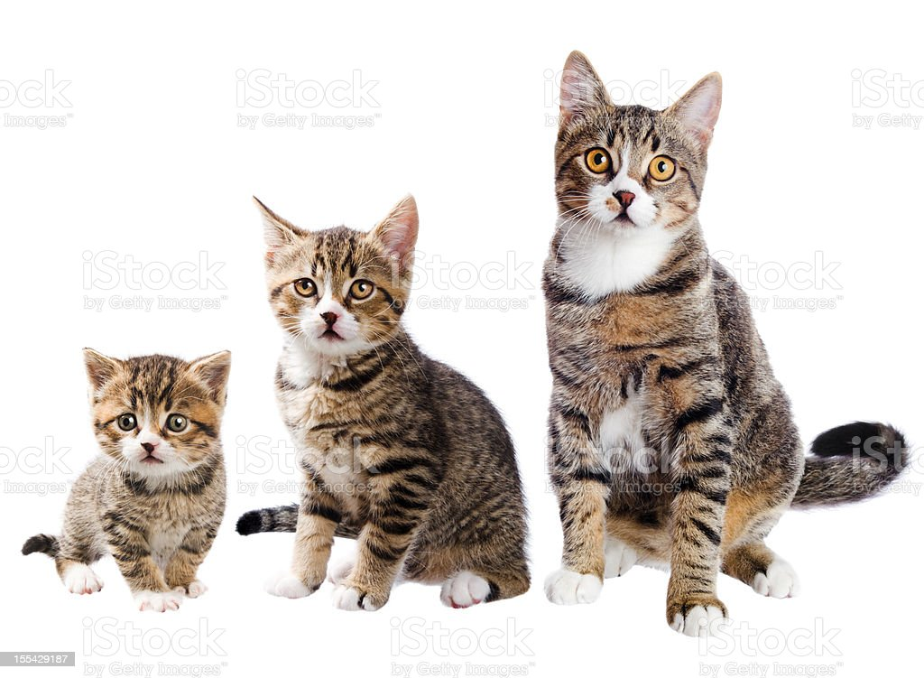 The cat with three lives stock photo