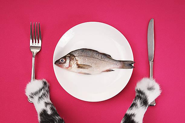 The cats dinner picture id182514966?b=1&k=6&m=182514966&s=612x612&w=0&h=sjghbe6soc8dq zpb33puenireg 7jms3hkdtlj3roc=