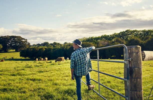 Die Rinder sind alle aus Weiden – Foto